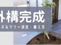 【外構完成】シンボルツリー決定・植え方